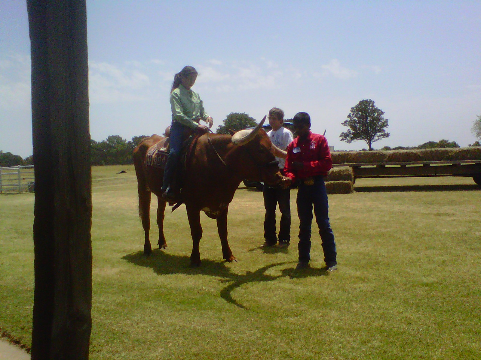 FASKE FAMILY demonstrate how to break a steer to ride